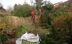 MDK Garden Services Tree Cutting